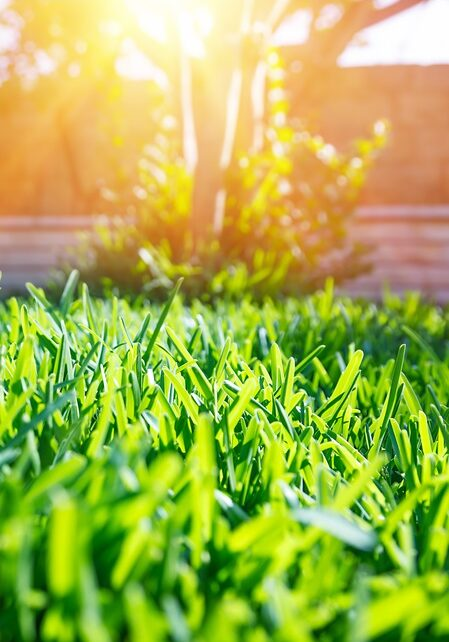 Grass Cut By Professional Exterior Facilities Company